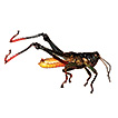 Revision of Aresceutica (Orthoptera: ...