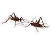 Ethology of the cricket Endecous (Endecous) ...