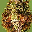 Studies on neotropical Phasmatodea XXII: ...