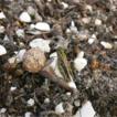 Initial impact of a soil disturbance ...